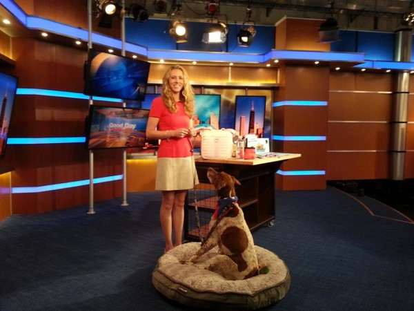 Dr. Derse and her dog Emma visiting the FOX Chicago studios to talk summer pet travel safety.